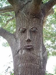 Tree Face   amazon com simon tree face tree plants garden outdoor