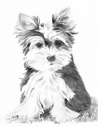 coloring pages outstanding yorkie coloring pages yorkie coloring