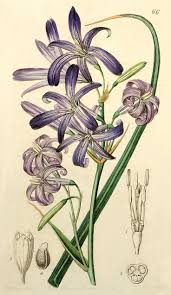 plants native to russia 293 best art lithographs images on pinterest botanical prints