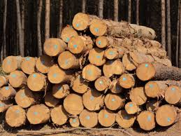 forestry wood science