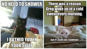 Herding Cats Meme - herding cats meme lol cats best of the funny meme