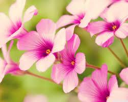 Flower Wallpaper Flower Wallpaper Download Qygjxz