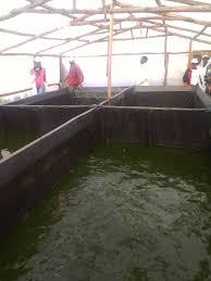 start a fish farm in your backyard you don u0027t need to dig ponds