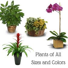 funeral plants funeral plants an important alternative to funeral flowers