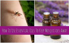 Best Way To Get Rid Of Mosquitoes In Your Backyard To Use Essential Oils To Keep Mosquitoes Away