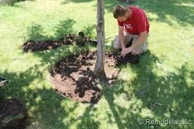 Landscaping Ideas Around Trees Bark Mulch Weed Control For Around Trees