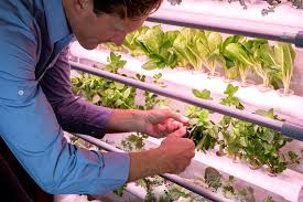 opcom proves you can grow more than weed with at home hydroponics