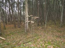 native plants of ohio blue jay barrens november 2015