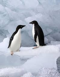 monty the penguin finds soul mate in scenes mirroring john lewis