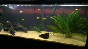Tropical Aquatic Plants - plant decoration ideas tropical fish keeping aquarium fish