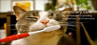 Kentucky traveling with cats images Springhurst animal hospital veterinarian in louisville ky usa JPG