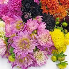 wholesale flowers online wholesale flowers in bulk heartseek info heartseek info