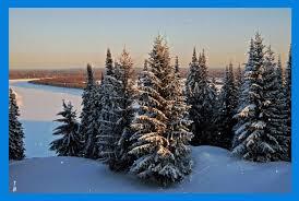 winter snowing snow winter cedar snowflakes lake fir trees