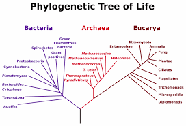 which organisms are composed of prokaryotic cells and which are