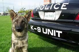 belgian malinois us secret service secret service dogs the k 9 division