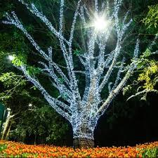 solar string lights outdoor string lights you ll wayfair