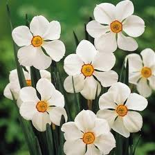 Ideas For Daffodil Varieties Design Best Daffodils 9 Varieties To Cheer Up Your Garden Bob Vila