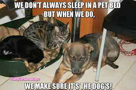 T Dog Memes - we don t always sleep in a pet bed funny cat meme