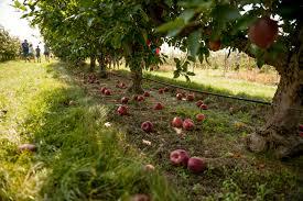 jonamac orchard and corn maze enjoy illinois