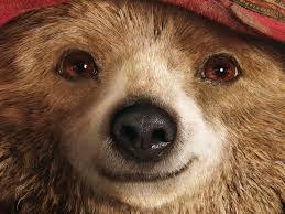 paddington bear u2013 reluctant zombie
