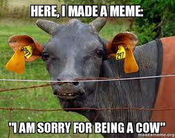 Cow Memes - here i made a meme i am sorry for being a cow hairless cow
