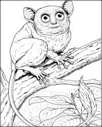 baby primates coloring pictures for kindergarten color zini