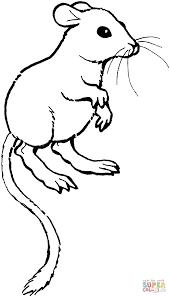 coloriage rat kangourou coloriages à imprimer gratuits