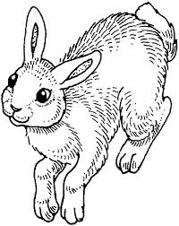 coloring bunny bunny baby looney tunes coloring pages