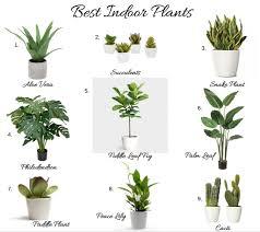 best house plants the best house plants best indoor plants kelly boyd design