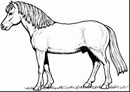 extraordinary black white horse coloring horse