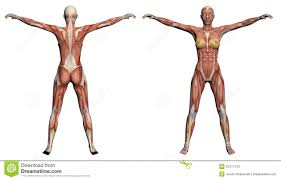 Human Figure Anatomy A Glorious Ton Of Muscular Female References From Various