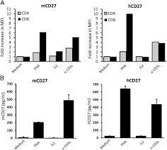 agonist anti human cd27 monoclonal antibody induces t cell
