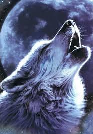 imagenes de fondo de pantalla lobos los mejores fondos de pantalla de lobos los mejores fondos mejor