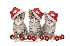 cat christmas merry christmas cat learntoride co