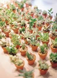vidã os de mariage cadeaux aux invités plantes succulentes plants graines arbustes