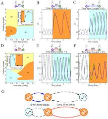 a design principle underlying the synchronization of oscillations