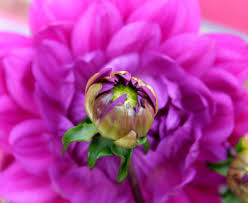 blumen lila andere blumen