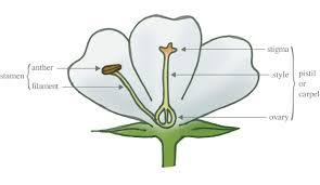 Style Flower Part - flowers rishi priyansh