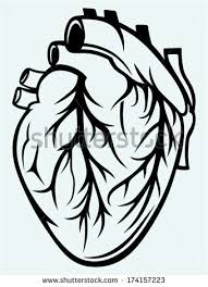 drawing human heart free vector download 93 782 free vector for