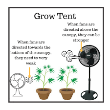 grow room oscillating fans how to set up your grow tent for an effective marijuana grow