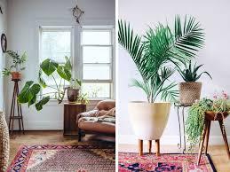 Best Living Room Plants The Best Plants For Indoor Bonjour Chiara