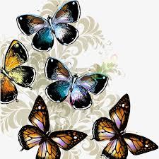 butterfly pattern creative butterfly pattern butterfly vector