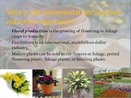 horticulture and flroriculture as agribusiness in india
