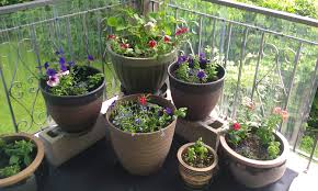Fragrant Plants For Pots Potted Plants For Patio Pictures Home Outdoor Decoration