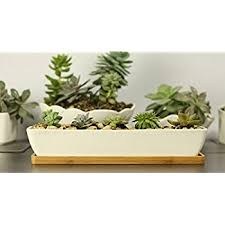amazon com 11 1 inch long rectangle white ceramic succulent