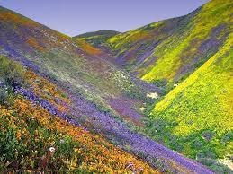 undiscovered indian treasures valley of flowers a pristine land