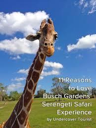 Busch Gardens Family Pass Why We Love Busch Gardens U0027 Serengeti Safari Experience