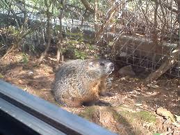 10 u201cwildest u201d things happening in national wildlife federation