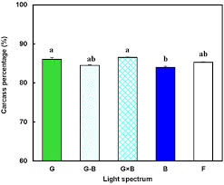 vital l full spectrum light for birds a new method to manipulate broiler chicken growth and metabolism