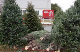 christmas tree sale kiwanis marshfield ma 02050